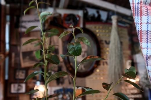 Wo Pflanzen wachsen ist Leben.